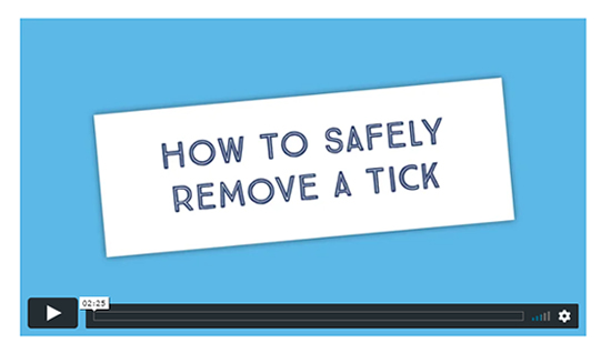 How to safely remove a tick